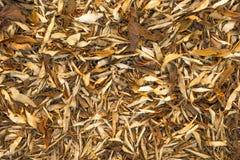 拍摄在秋天公园 干叶子 免版税库存照片