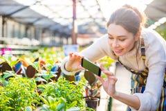 拍植物的照片有智能手机的愉快的妇女花匠 图库摄影