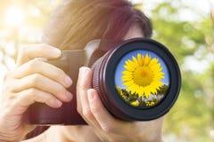 拍照片用向日葵的妇女 免版税库存图片
