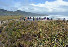 拍照片的游人在普纳凯基岩石,西海岸新的Zealan 免版税库存照片