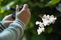 拍照片的butterfliy的人手 免版税库存图片