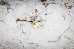 轻拍玫瑰色在大理石sairs 图库摄影
