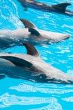 拍的海豚 库存照片