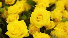 轻拍黄色玫瑰大花束,特写镜头 影视素材