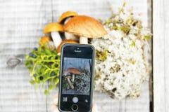 拍mashrooms的照片智能手机 免版税库存图片
