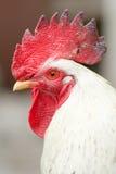 拒绝流感s的鸟 免版税库存照片