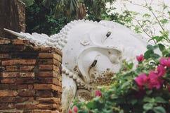 拒绝的菩萨围拢与豪华的热带植被 库存照片