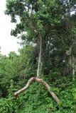 拒绝死的树 库存图片