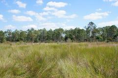 拔塞螺旋沼泽圣所的Sawgrass大草原 免版税库存图片