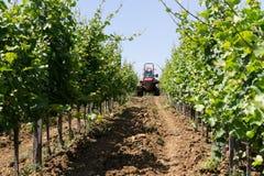 拖拉机喷洒的葡萄园 免版税库存图片