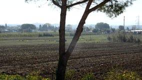 拖拉机土壤为播种做准备 股票录像