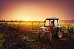拖拉机在日落的葡萄园里 免版税库存照片