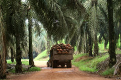 拖拉机在油棕榈树种植园-系列4 免版税库存图片