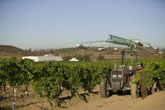 拖拉机在葡萄园里 免版税库存图片