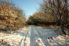 拖拉机在雪的轮胎跟踪 库存图片