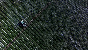 拖拉机灌溉的种植园领域空中射击  股票录像