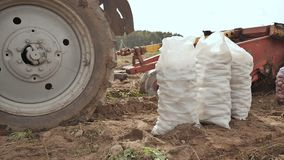 拖拉机犁并且挖掘carft 白色充分的大袋土豆在领域站立 收获土豆  股票视频