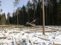 拖拉机装货木材在冬天森林里 免版税库存照片