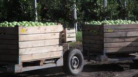 拖拉机运输木容器苹果充分结果实 影视素材