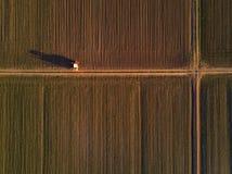 拖拉机鸟瞰图在培养的玉米玉米庄稼领域的 库存照片