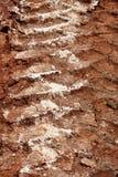 拖拉机,挖掘机,汽车,在泥泞的足迹的汽车轮胎轨道 泥和轮子在路追踪在雨以后 免版税图库摄影