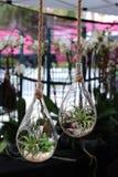 拖曳与绿色植物的装饰花瓶形式玻璃作为花束在小商店在星期天市场上的待售和公平 免版税库存照片