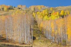绳索拖曳在秋天 库存图片