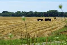 拖车在玉米田 免版税库存图片