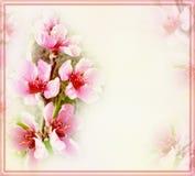 招呼与桃子花和框架的花卉卡片 免版税库存照片