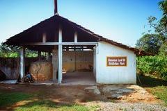 招标叶子桂香(樟脑属zeylanicum) 桂香树和灌木的工厂种植园 库存照片