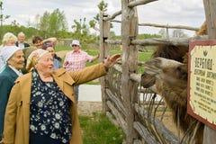 拜访世界大战2徒步旅行队公园的退伍军人在俄罗斯的卡卢加州地区 免版税库存图片