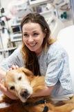 拜访年轻女性患者的疗法狗在医院 图库摄影