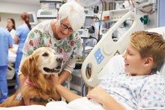拜访年轻男性患者的疗法狗在医院 免版税图库摄影