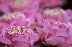 围拢由莲花的自然秀丽 免版税库存图片