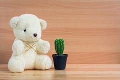 拥抱一个杯子和仙人掌在棕色木背景的白熊 免版税库存图片