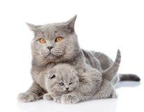 拥抱一只新出生的小猫的成人母亲猫 查出在白色 图库摄影
