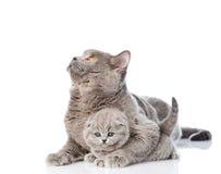 拥抱一只新出生的小猫的成人母亲猫 隔绝在白色bac 库存照片