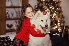 拥抱一条大白色狗的一件红色毛线衣的美丽的愉快的女孩  图库摄影