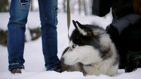 拥抱与他们的阿拉斯加的爱斯基摩狗狗的逗人喜爱的愉快的夫妇家庭画象舔人的面孔 滑稽小狗佩带 影视素材