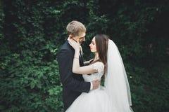 拥抱在日落的公园的新婚佳偶美好的浪漫婚礼夫妇  免版税库存照片