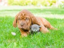 拥抱在绿草的红葡萄酒小狗一只小猫 免版税库存图片
