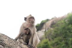 拥抱她的母亲猴子的小猴子 图库摄影