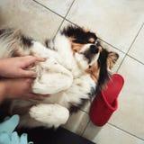 拥抱小狗 图库摄影