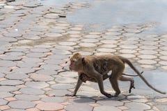 拥抱小猴子的母亲猴子 泰国 免版税库存照片