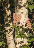 拥抱树干的女孩手 拿着桦树 免版税图库摄影