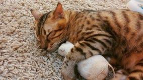 拥抱玩具老鼠的软的焦点睡觉猫 免版税图库摄影