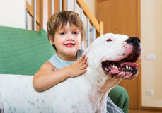 拥抱白色狗的小女孩 库存图片