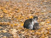 拥抱的三只猫冷在秋天 免版税库存图片