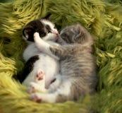 拥抱的小猫户外在自然光 免版税库存照片
