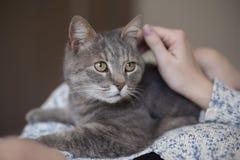 拥抱的猫 免版税库存图片